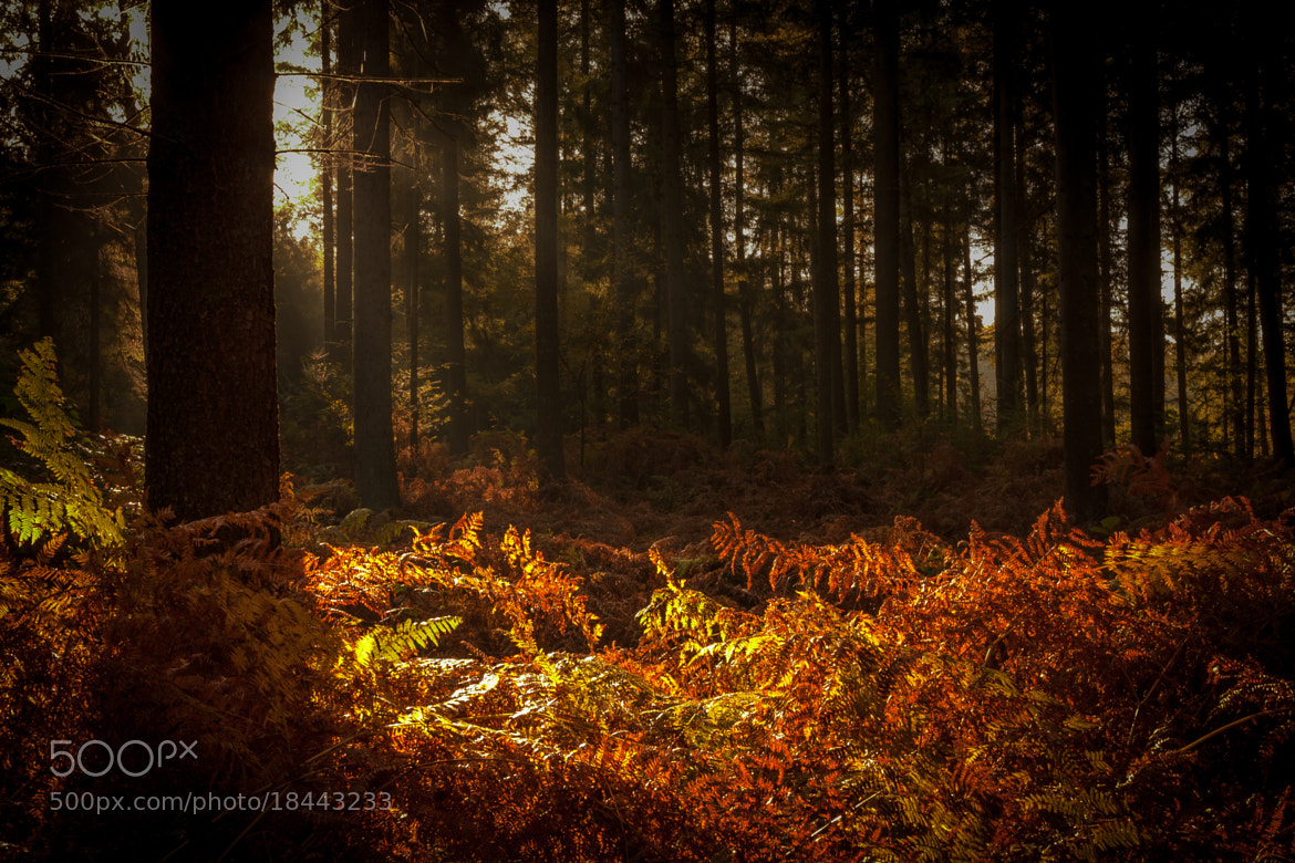Photograph Last fall colors by Marcel Kerkhof on 500px