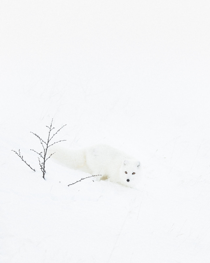Snowed In. by Benjamin Hardman on 500px.com