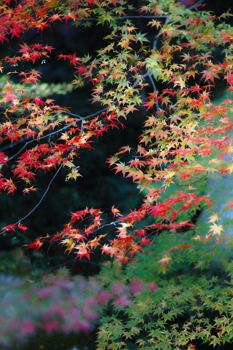 Photograph autumn colors 5 by keiichi ebina on 500px
