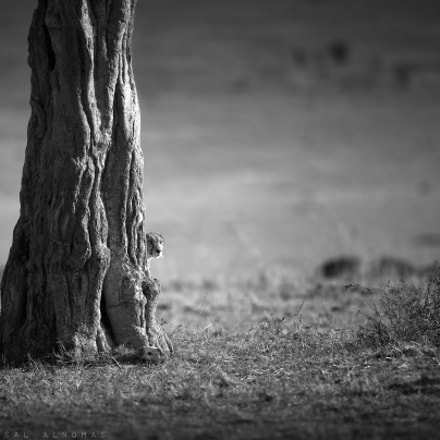 Watching For Hunting, Canon EOS-1D X MARK II, Canon EF 500mm f/4L IS II USM