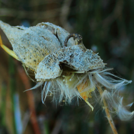 Seed Pod, Canon EOS 7D, Canon EF 35-80mm f/4-5.6 USM
