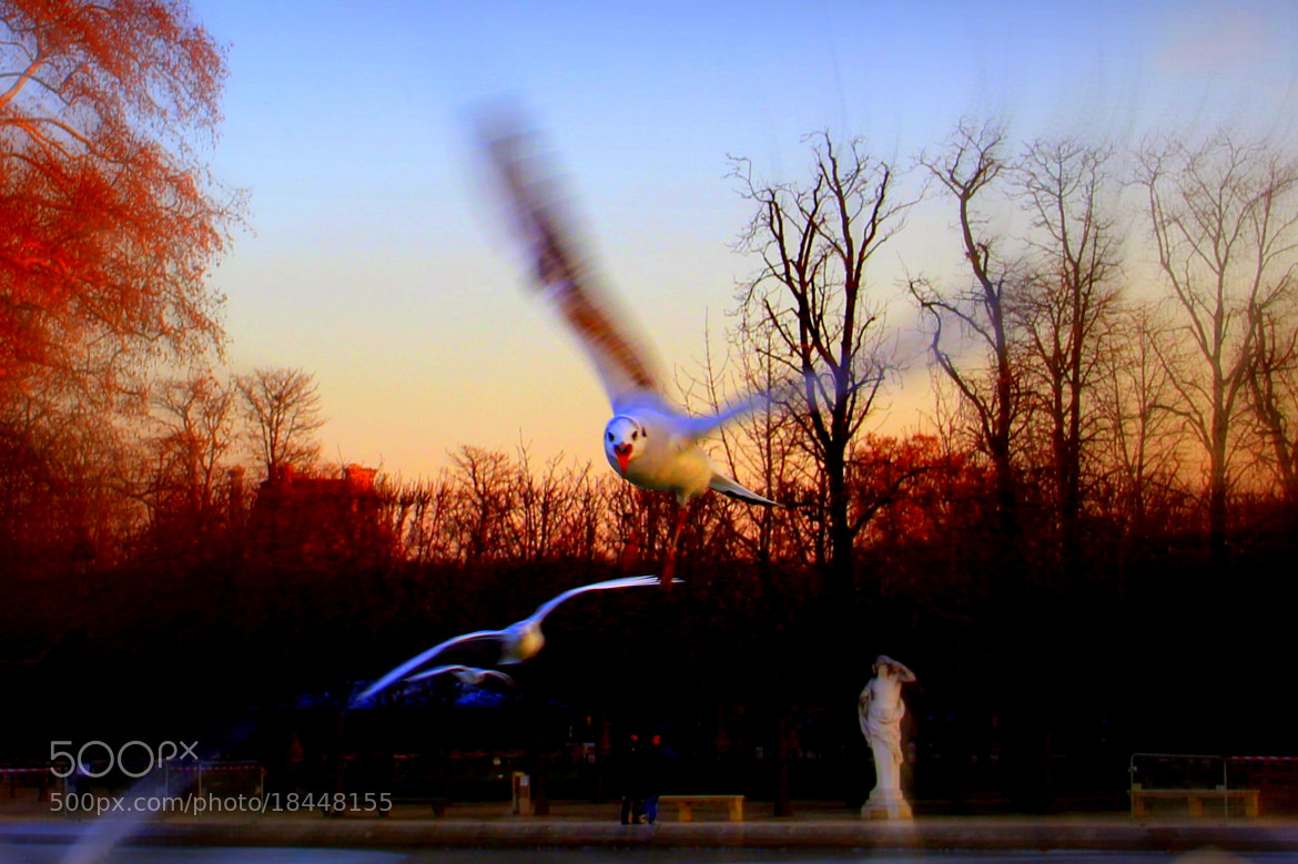 Photograph Bird attack by Stéphane Jean on 500px