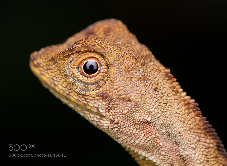 Photograph Lizard head shoot by Mojtaba Zeinalzadegan on 500px