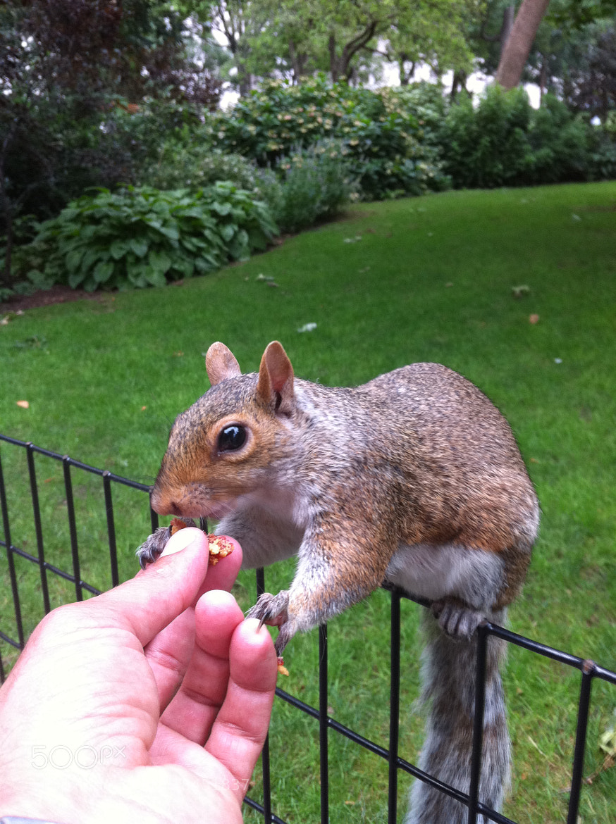 Photograph Observe the footprint of the claw paw squirrel on my finger by Michael FRANCHITTI on 500px