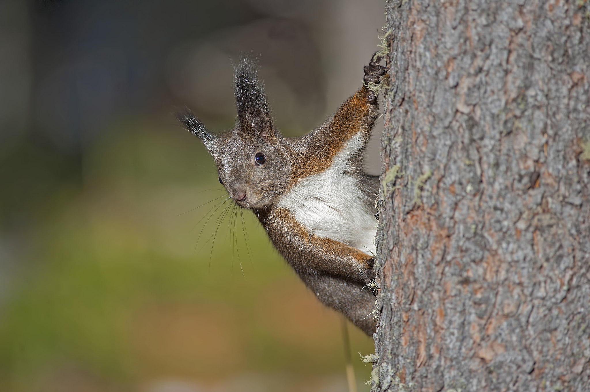 Photograph Curious squirrel by Riccardo Trevisani on 500px
