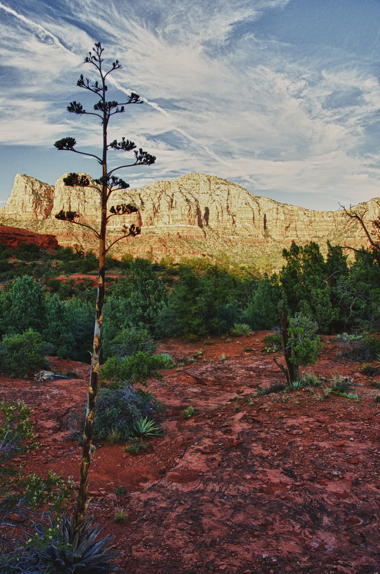 Photograph Yucca at Sedona by Ray Campbell on 500px