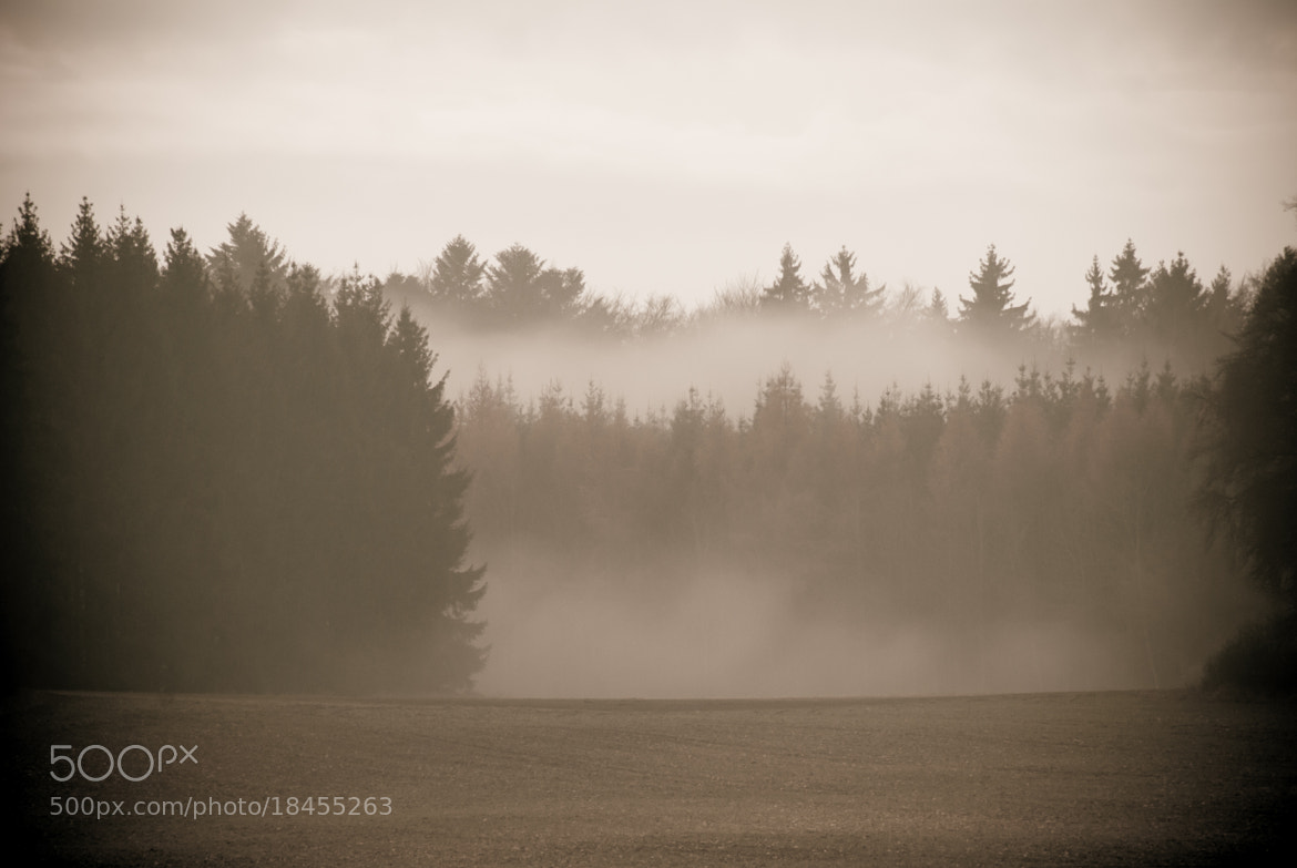 Photograph Foggy forrest by Andy Vobiller on 500px