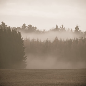 Foggy forrest by Andy Youdontnow (AndyYoudontnow)) on 500px.com