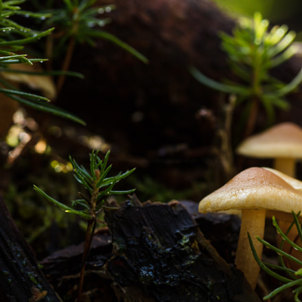 Funghi, Canon EOS 5DS, Tamron 90mm f/2.8