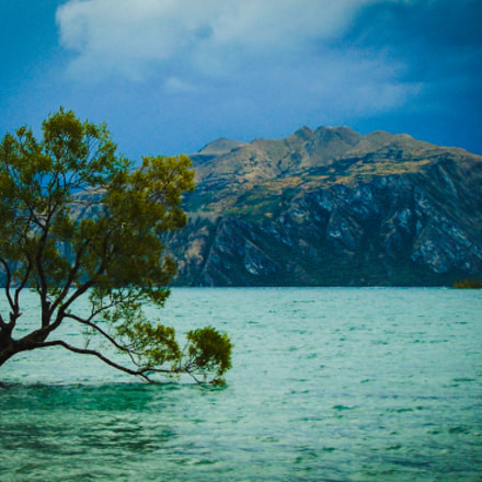 That Wanaka Tree, Sony DSC-H300