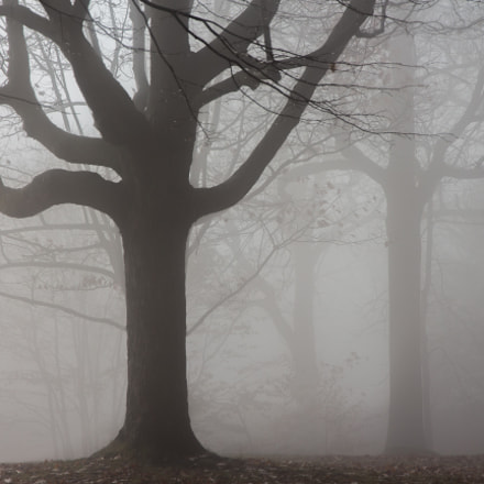 Misty forest, Canon EOS REBEL T4I, Canon EF-S 15-85mm f/3.5-5.6 IS USM