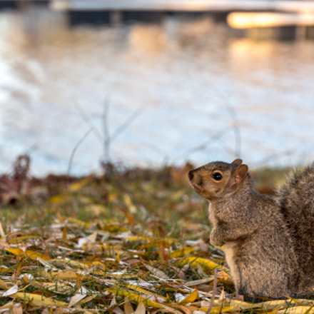 Cute Squirrel, Canon EOS REBEL T4I, Canon EF-S 15-85mm f/3.5-5.6 IS USM