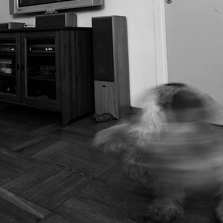 Ghost Dog, Nikon D40, Sigma 10-20mm F4-5.6 EX DC HSM