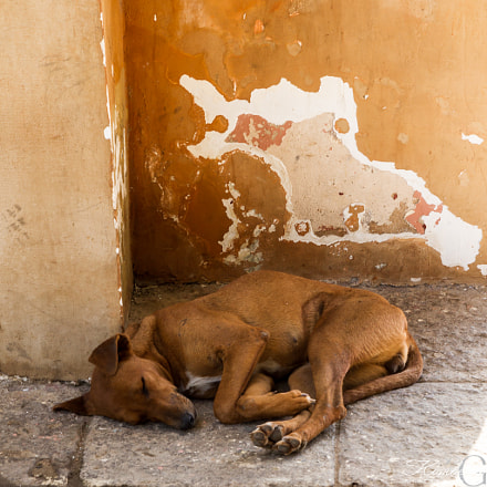 Homeless puppy, Canon EOS 7D, Sigma 24-70mm f/2.8 EX
