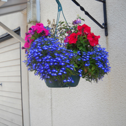 Red over Blue Flowers, Nikon COOLPIX L20