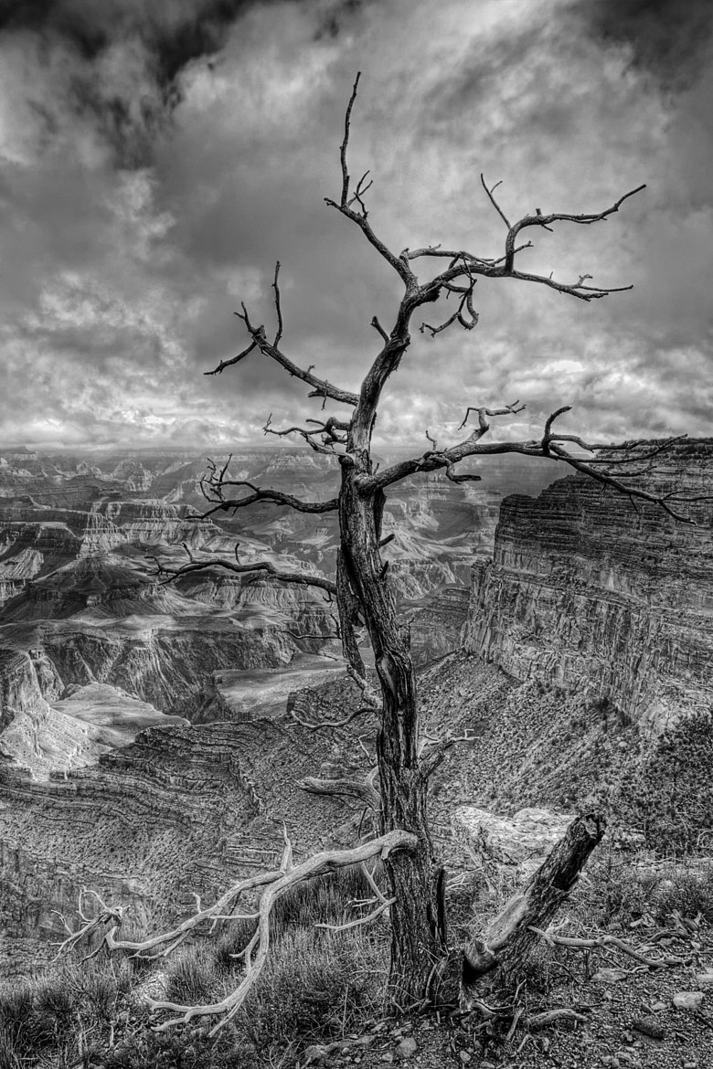 Photograph Lost The Fight by Scott Evers on 500px