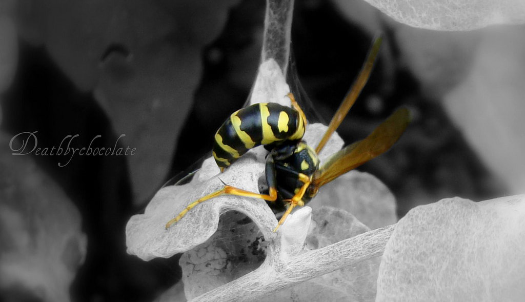 Photograph A bee's butt by Erick Johnson on 500px