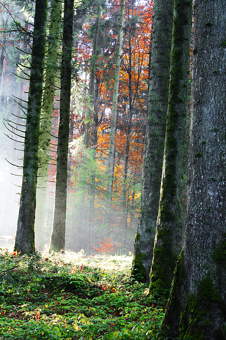 Photograph Forest atmosphere by Stephan Scherz on 500px
