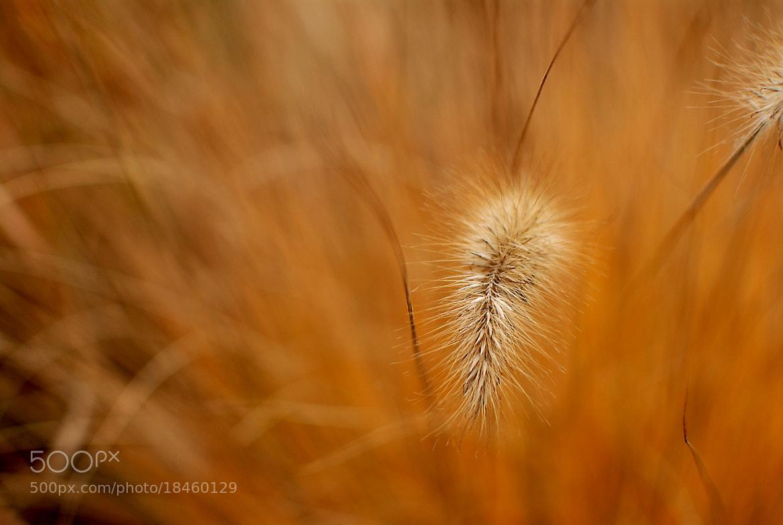 Photograph  Rabbit tail by Slobodan  Zecevic on 500px