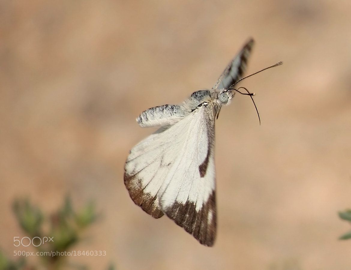 Photograph Desert white  by ammadoux doux on 500px