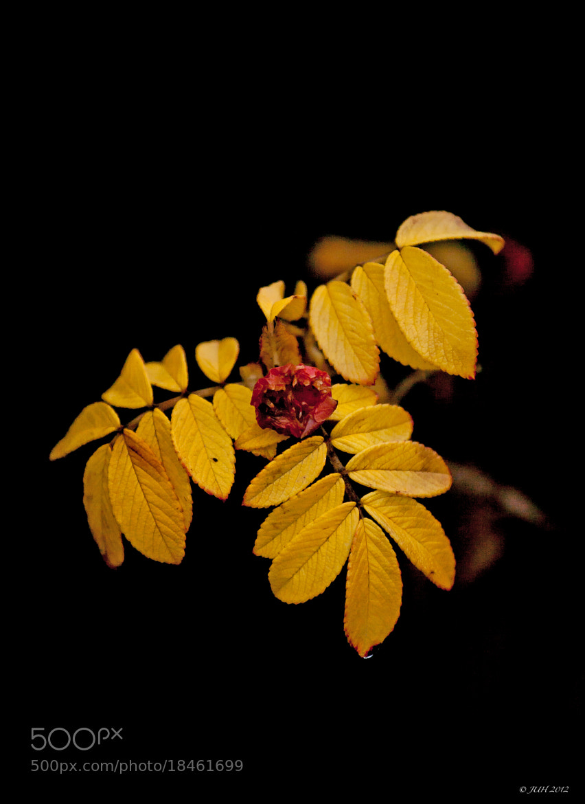 Photograph autumn Leaves by Jens-Uwe Hoffmann on 500px