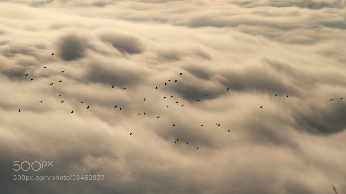 Photograph Flying above clouds by Julien Jasseny on 500px