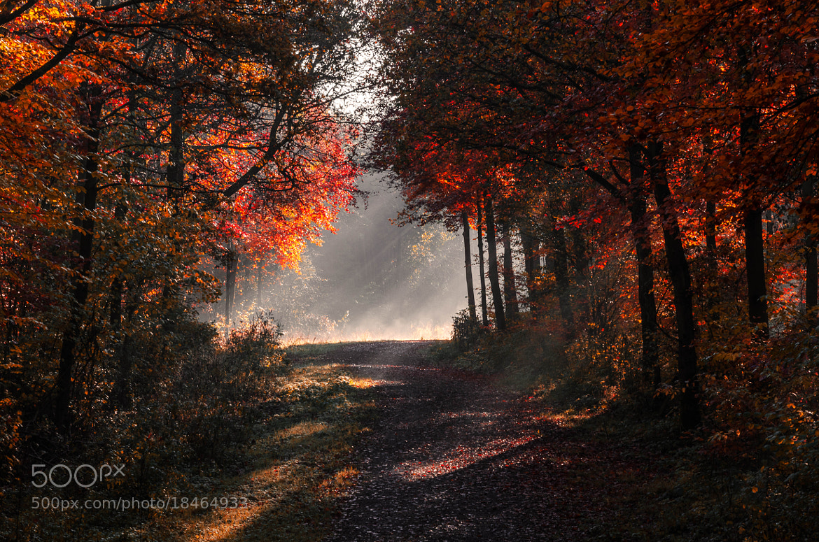 Photograph November Morning by Pawel Niktos on 500px