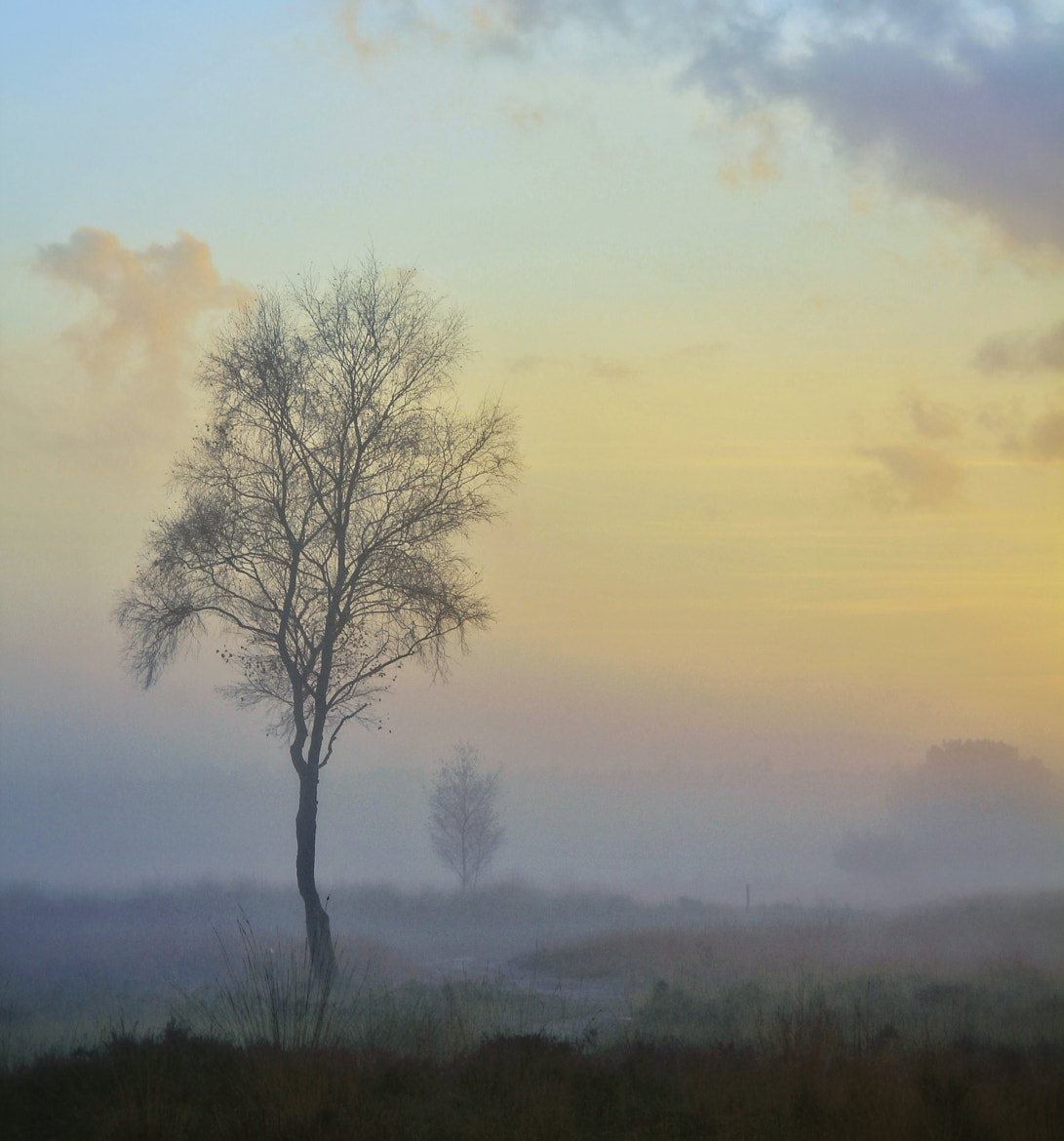 Photograph Tree in the mist by Joost Lagerweij on 500px