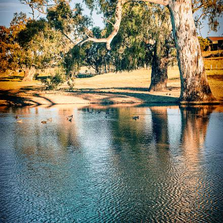 Eucalyptus pond