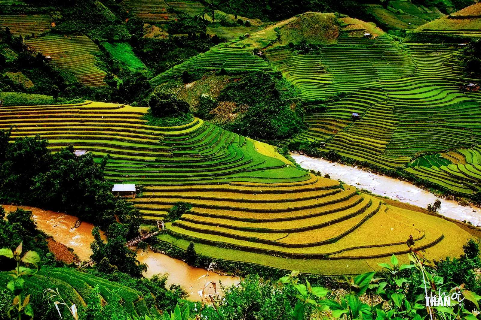 Photograph Terraced rice fields by Khoi Tran Duc on 500px
