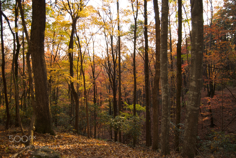 Photograph Autumn Glow by Mark Jones on 500px