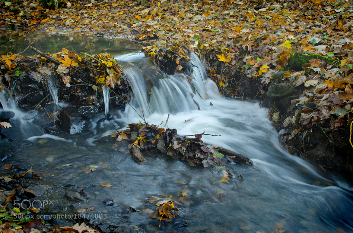 Photograph Autumn Leaves by the Stream by Youngman Images on 500px