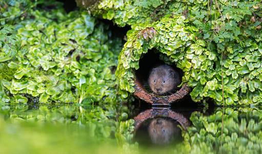 vole in a hole..