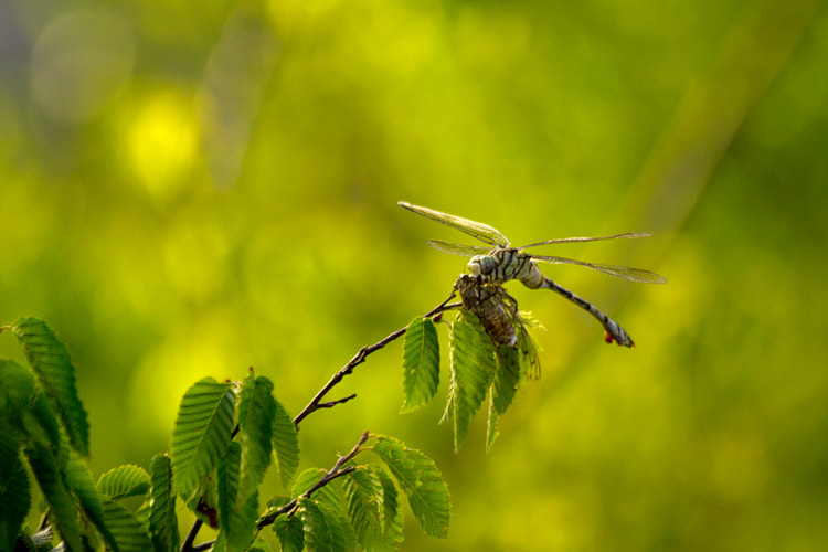 Photograph The Dragonfly by Igor Maric on 500px