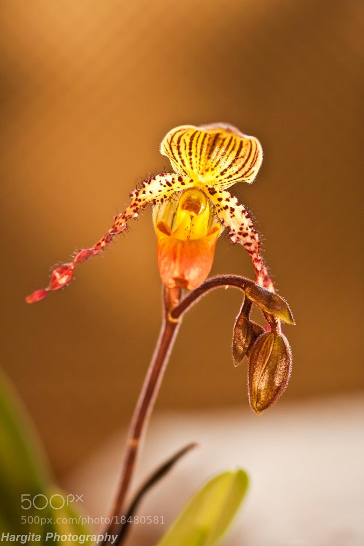 Photograph Flower by Ottó Hargita on 500px