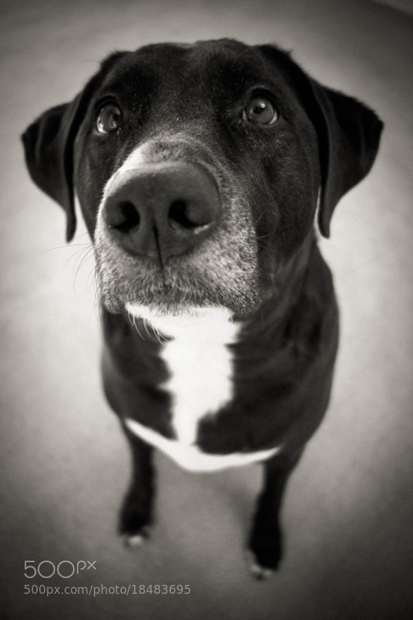Photograph Max by Christopher Batt on 500px