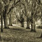 Irish National War Memorial Gardens