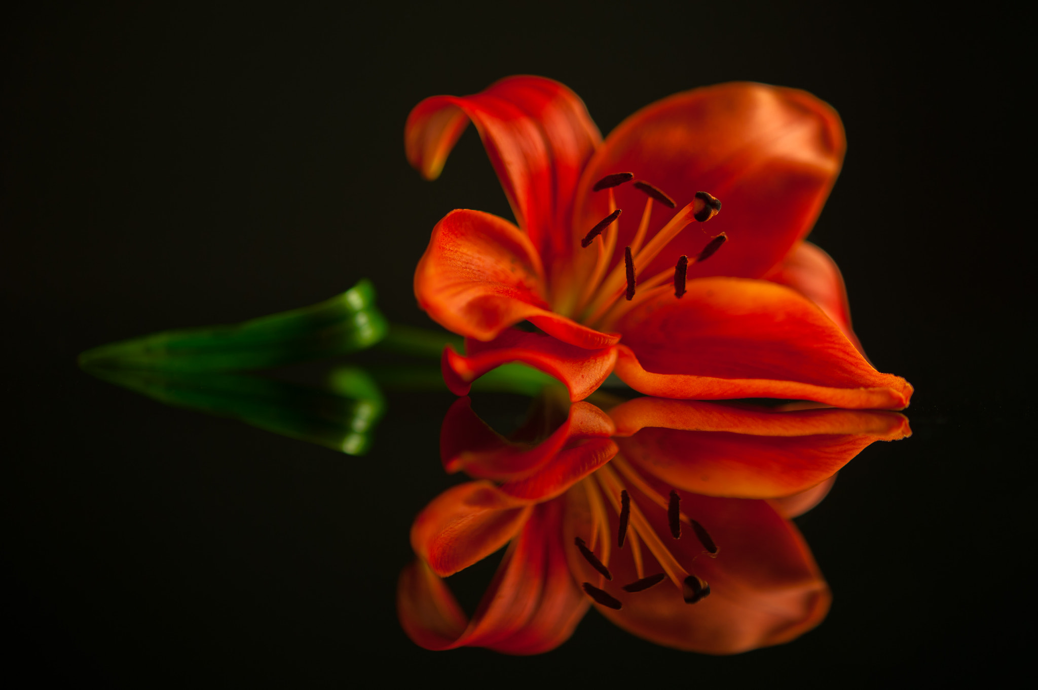 Photograph Red Lily by Jenni Lucas on 500px