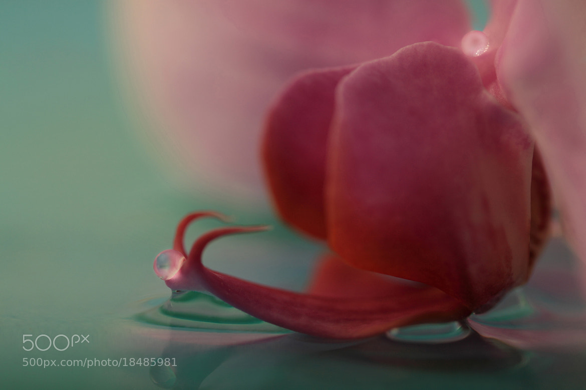 Photograph Snail Orchid by Gry Heubach on 500px