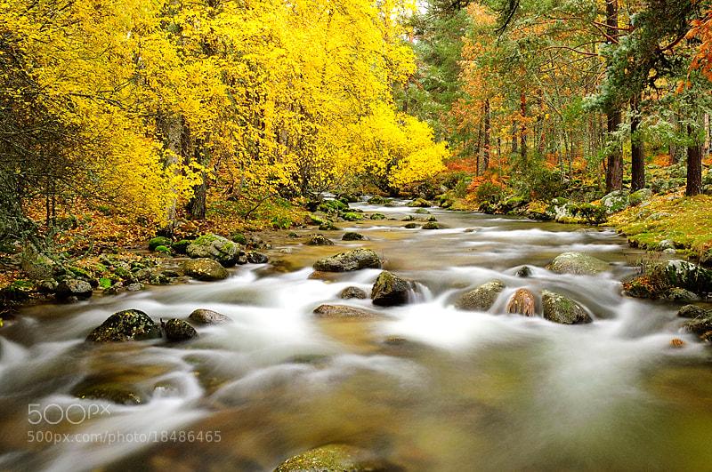 Photograph Lozoya River in autumn I by Fernando Sánchez on 500px