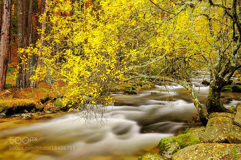 Photograph Lozoya River in autumn II by Fernando Sánchez on 500px