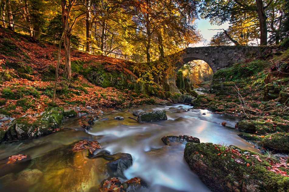 Photograph Tollymore Forest by Stephen Emerson on 500px