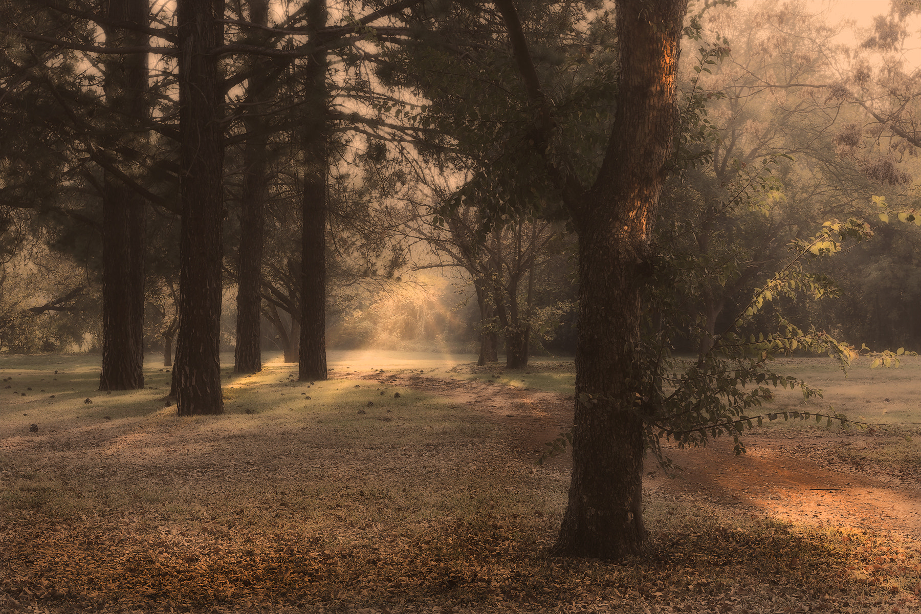 Photograph Early in the Morning by Pieter Oosthuysen on 500px