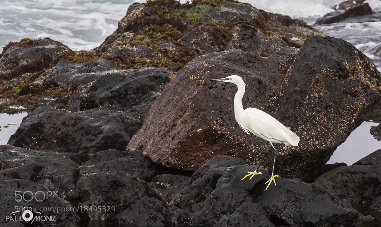 Photograph Bird I by Paulo Moniz on 500px