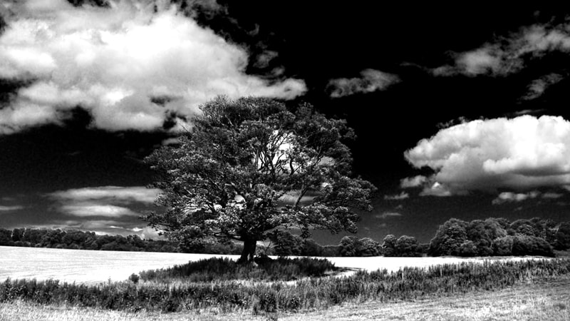 "Photograph ""Alnwick Tree"" by Dave Christie on 500px"