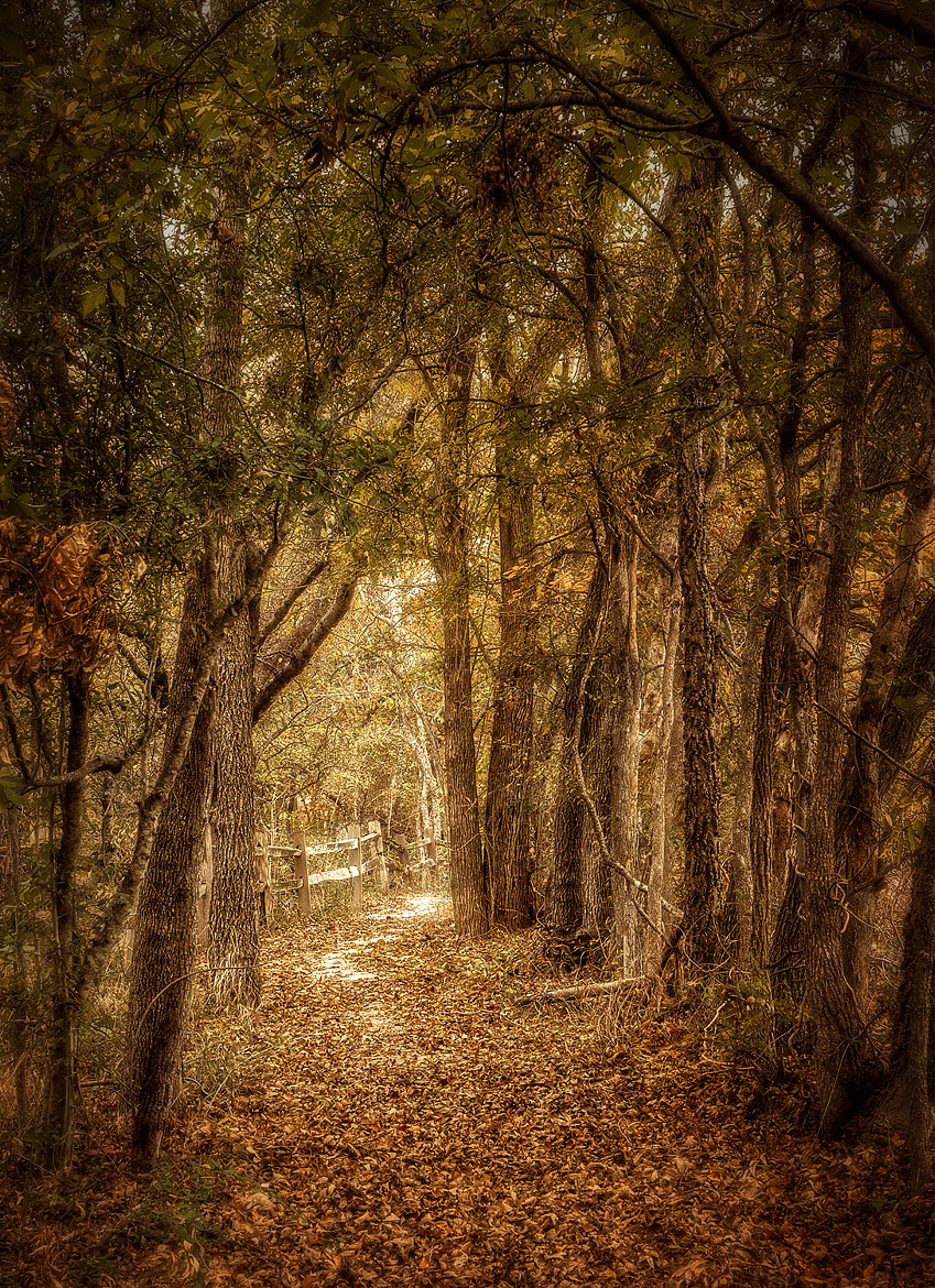Photograph The Path Not Taken by Scott Norris on 500px