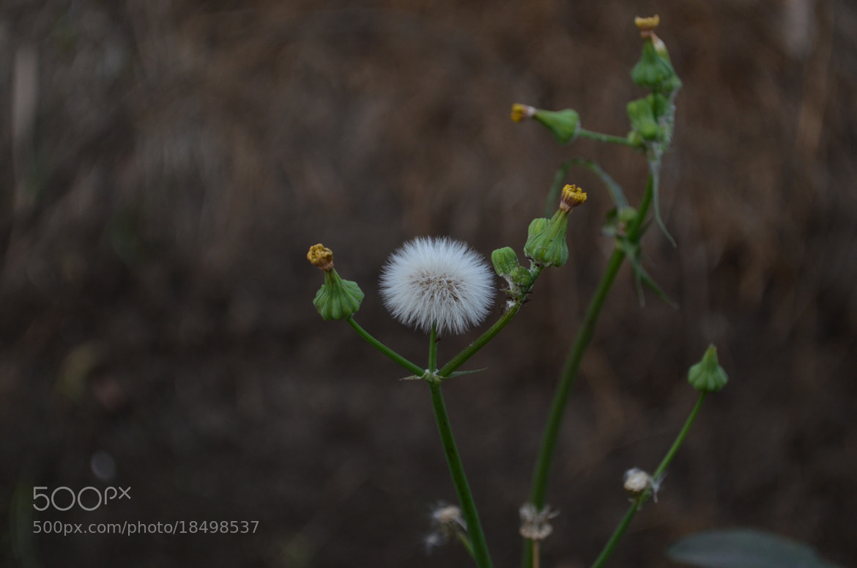 Photograph Snow flower by ayman aziz on 500px
