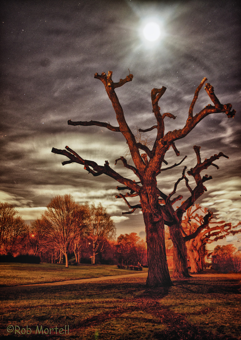 Photograph Trees  by rob mortell  on 500px