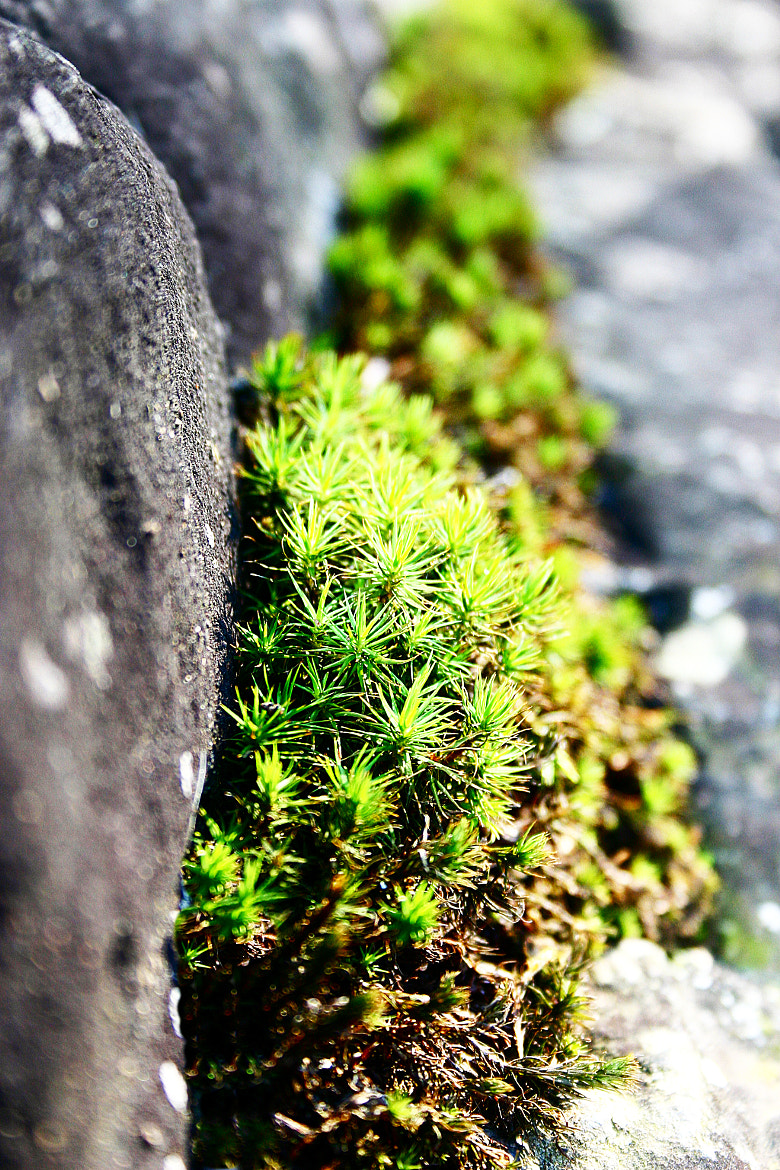 Photograph Mini world by PhotoPalette  on 500px