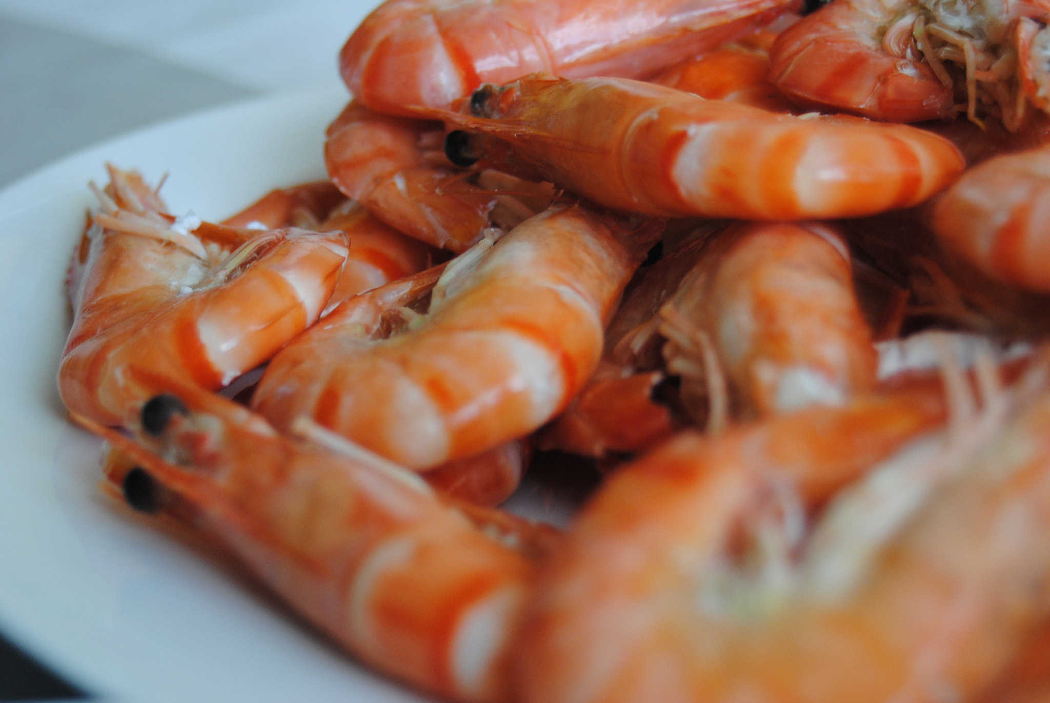 Photograph shrimp by Catarina  on 500px